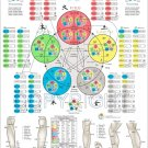 """The Five Elements of Acupuncture Points Poster Wall Chart 18"""" X 24"""""""