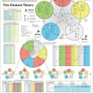 """The Five Element Theory of Acupuncture Poster Wall Chart 18"""" X 24"""""""