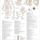 """Extraordinary Non Meridians Acupuncture Points Poster 18"""" X 24"""" Wall Chart"""