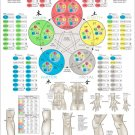 """Five Elements of Acupuncture Theory Points Poster Wall Chart 24"""" X 36"""""""