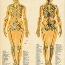 "Female Skeletal System Anatomy Poster 18"" X 24"" Medical Anatomical Chart"
