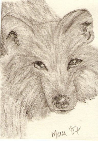 Timber Wolf ACEO Print signed & numbered