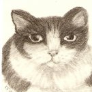 Domestic Shorthair Cat - Black & White ACEO Print