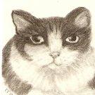 Domestic Shorthair Cat - Black & White ACEO Print