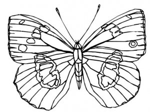 BUTTERFLIES Printable Coloring eBook on CD - 105 Pages Coloring Sheets Book