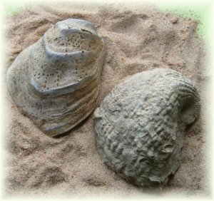 Two Cretaceous Fossils from Alabama