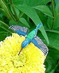Beautiful lifelike hummingbird