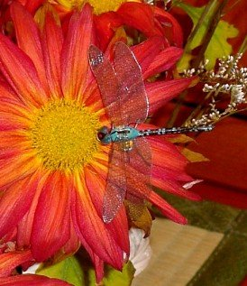 Lovely lifelike dragonfly