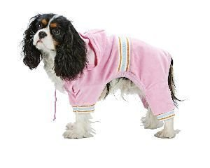 XXX Small Dog Pucci Warm Up Suit - Pink