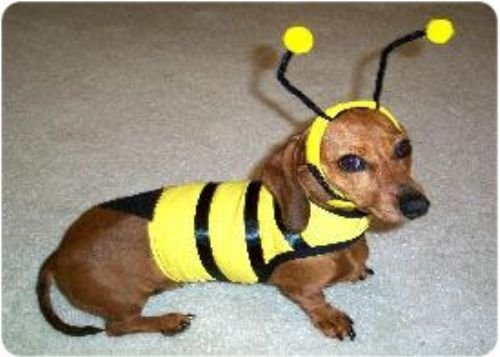 XX Small Bumble Bee Dog Costume