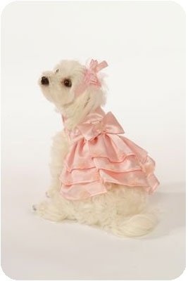 Small Satin Dog Dress Set With Hat & Leash - Pink