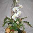 Rima Beauty orchid