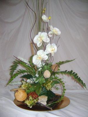 Rima Beauty orchid