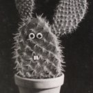 Nouvelles Images Cactus Postcard by Ernst Voller