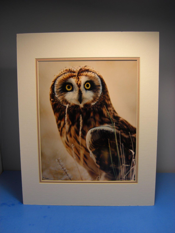 "Warren Magill ""Short Earred Owl"" LTD ED Signed Color Photograph"