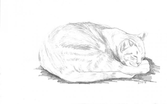 Original Graphite Pencil Drawing Curled Sleeping Cat Art by LJT
