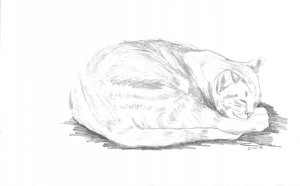 Original Graphite Pencil Drawing Curled Sleeping Cat Art by LJT