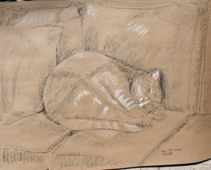 Original Black and White Conte Crayon Drawing Sleeping Cat Curled in Ball Art by LJT