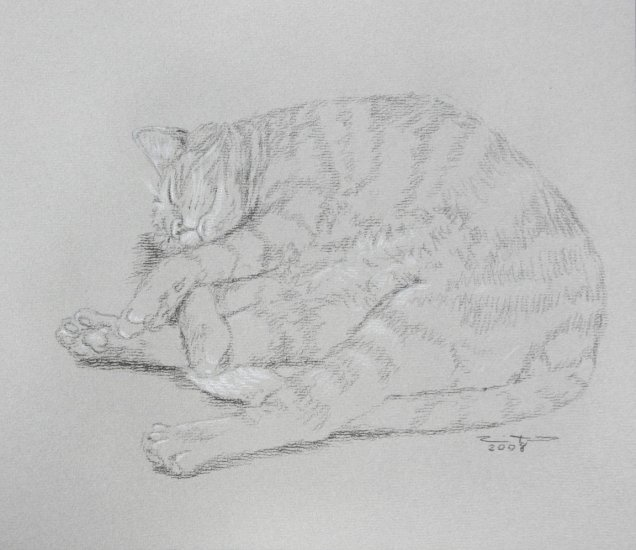Original Black and White Conte Crayon Drawing Sleeping Tabby Cat toned paper Art by LJT