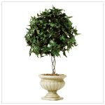 Ivy Topiary in Alabastrite Pot
