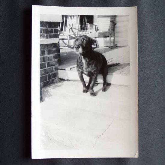 Vintage Black and White Photo Black Dog Sitting on Front Porch c1940s (PH016)
