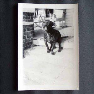Vintage Black and White Photo Black Dog Sitting on Front Porch c1940s (PH016)