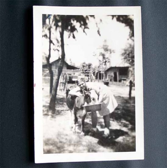 Vintage Black and White Photo Young Woman Hugging Cow c1940s (PH014)