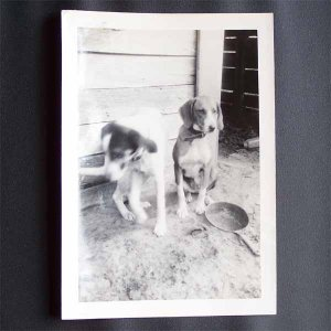 Vintage Black and White Photo 2 Dogs c1940s (PH015)