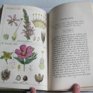1856 Ladies' Botany by John Lindley 5th Edition Two Volumes 50 Hand-Colored Plates Flowers Plants