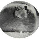 Rat in Bread Round Postcard
