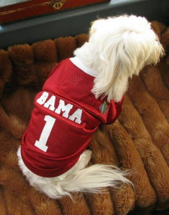 Alabama Crimson Tide Deluxe NCAA Sports Logo Dog Football Jersey Medium Size