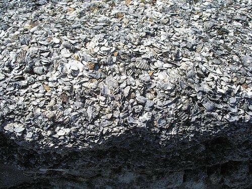 Large Coquina Stones