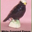 White Crowned Pigeon   Canadian Tenderleaf Tea Bird     Number 30