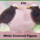 Canadian Tenderleaf Tea Premium Bird  White Crowned Pigeon     Number 30