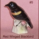 Canadian Tenderleaf Tea Bird  Red Winged Blackbird  Scarce Variation