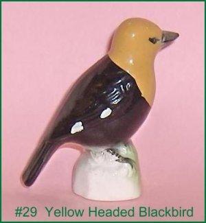 Yellow Headed Blackbird Canadian  Tenderleaf  Tea  Premium  Bird Number 29