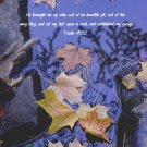 """Fall Wonder**""""8"""" x10"""" Matted Origianl Photo**Psalm 40:2"""