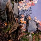 """Fall Leaves Resting**8""""x10"""" Matted Original Photo"""