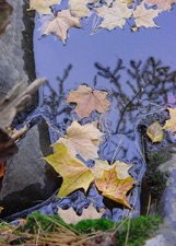 "Fall Wonder**""8"" x10"" **Matted Original Photo"