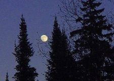 "Moon Night**8""x10"" Matted Original Photo"