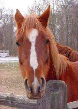 "Horse Sense**8""x10"" Matted Original Photo"