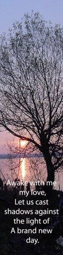 Tree Silhouette***Inspirational