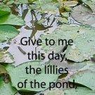 Water Lillies***Inspirational