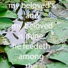 Water Lilies***Biblical? Song of Solomon 6:3