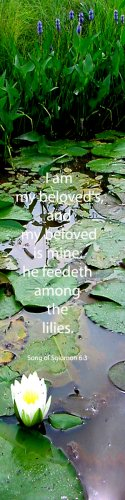 Water Lilies***Biblical? Song of Solomon 6:3