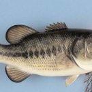 "20"" Largemouth Bass 6lb. reproduction fish mount/Taxidermy/Fishing/Hunting"
