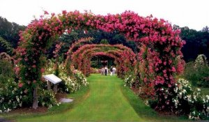 Garden & Landscape Photo Idea CD