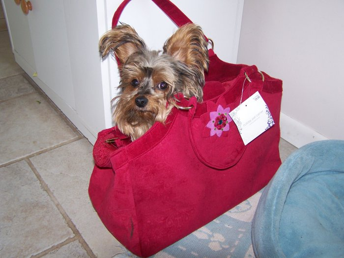 NEW with tags Red Dog Bag Purse