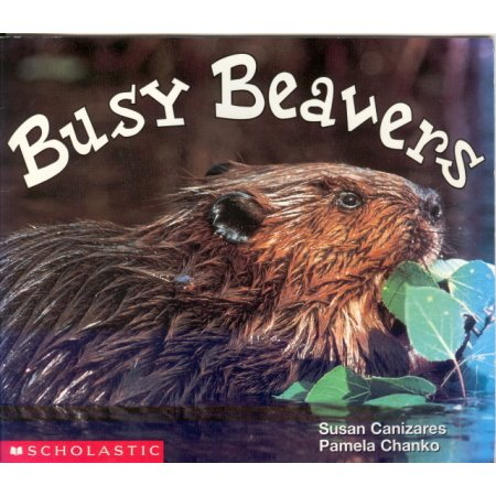 Busy Beavers Early Reader Pre-school Science Reading