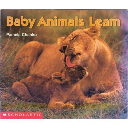 Baby Animals Learn Reading Pre-school Science Reader  Book